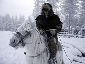 yakut-horse
