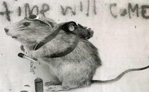 Banksy dead rat