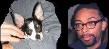 Spike Lee and chihuahua