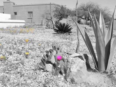 cactiflowerpink
